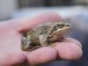 Otiz und der Frosch