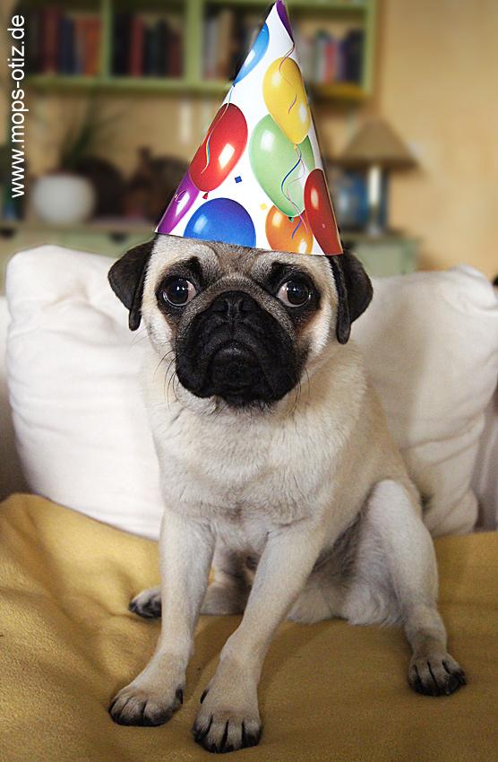 Mops hat Geburtstag