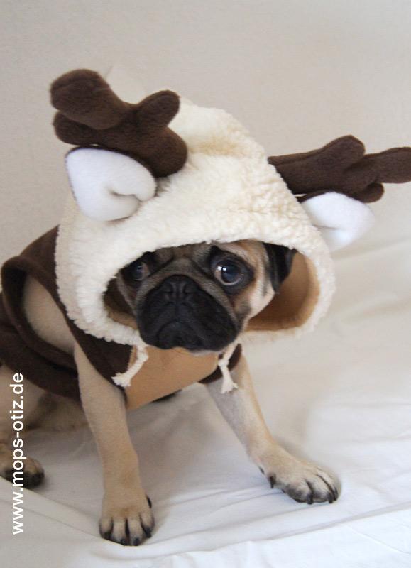 Otiz der kleine Weihnachtsmops